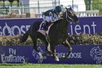 Breeders Cup: A look at the Turf Sprint