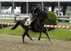Exaggerator tries to turn tables on Nyquist in Preakness
