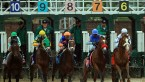 All You Need to Know About the Kentucky Derby